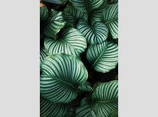 Download iPhone Wallpapers   Unsplash