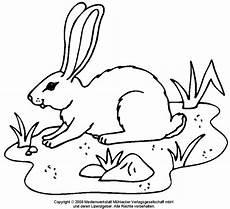 Ausmalbilder Tiere Hasen Ausmalbilder Tiere Hasen Hasen Zum Ausdrucken Ausmalbilderhq