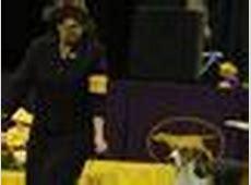 Affenpinscher wins Best in Show at Westminster dog show