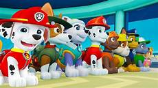 gratis malvorlagen paw patrol ultimate paw patrol ultimate rescue all ultimate pups zuma