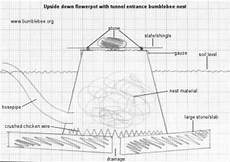 bumble bee house plans plans for bumblebee nestboxes