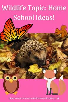 wildlife topics wildlife topic home school ideas mum on a mission for a better life