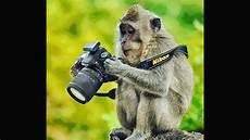 Fantastis 22 Gambar Lucu Monyet Photographer Richa Gambar