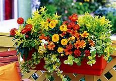 piante di fiori il piacere di piante e fiori per il balcone
