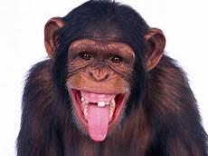 Gambar Gambar Monyet Lengkap