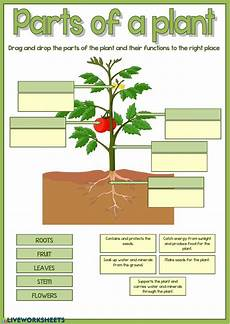 types of plants worksheets for grade 2 13744 parts of a plant interactive worksheet
