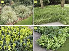 choisir les couvre sols selon l exposition d 233 tente jardin