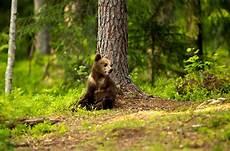 les animaux en voie de disparition journ 233 e de la terre les animaux en voie de disparition