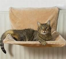 amaca gatto amaca per gatti tipologie e consigli miciogatto it