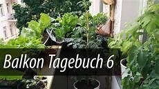 balkon tagebuch 6 gurken tomaten und salat gehen in die