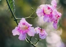 corso fiori di bach on line corso di fiori di bach studio corsi