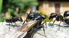 was tun gegen ameisen in der wohnung lebensart