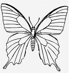Butterfly Png Gambar Sketsa Kupu Kupu 1789x1803 Png