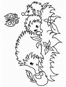 Ausmalbild Igel Gratis Hedgehog Coloring Pages And Print Hedgehog