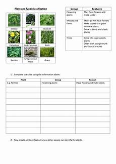 plant kingdom worksheets for grade 2 13758 plant classification by fjefferies123 teaching resources tes