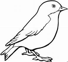 kleiner vogel skizze ausmalbild malvorlage tiere