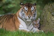 update our tiger cubs been named at the zoo