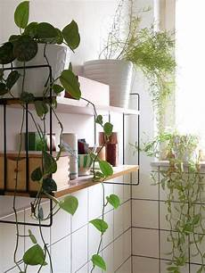 Bathroom Ideas Plants by Plants Galore Plants Hanging Plant And Houseplants