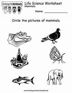 kindergarten life science worksheet printable worksheets legacy science worksheets animal