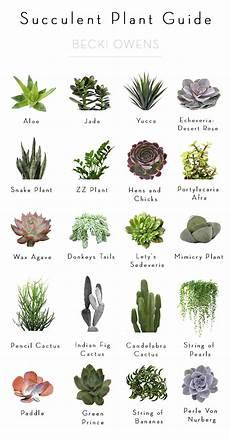 best of blog indoor plantsbecki owens