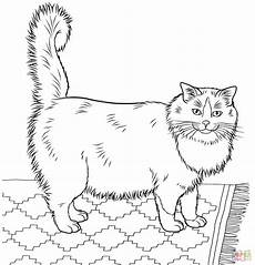 Ausmalbilder Siamkatze Ausmalbild Ragdoll Katze Ausmalbilder Kostenlos Zum