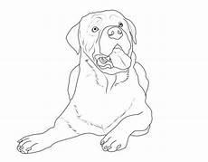 Malvorlagen Hunde Rottweiler Kostenlose Malvorlage Hunde Rottweiler Zum Ausmalen