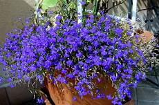 fiori a cascata hello green blue color green