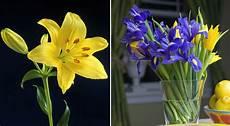 gigli fiore giglio fiore come coltivarli e moltiplicarli con le