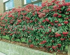 kletterpflanze schatten immergrün immergr 252 ne kletterpflanzen tolle bilder archzine net