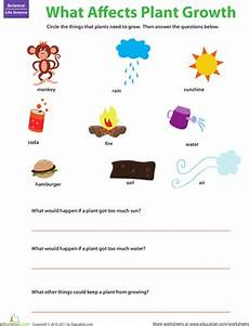what plants need worksheets grade 13590 plant matters what plants need worksheet education