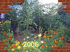tomaten spitze kappen tomaten tagebuch juli 2006