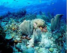 Malvorlagen Unterwasserwelt Berlin Unterwasserwelt Curacao Radio Paradiso Berlin