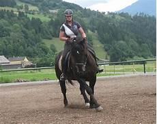 kleinanzeigen pferde lebhaft zu verkaufen