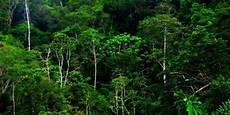 Peningkatan Suhu Bumi Akan Ubah Struktur Ekosistem Hutan