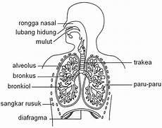 Struktur Sistem Respirasi