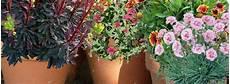 Culture Des Plantes Vivaces En Pot