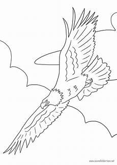 Ausmalbilder Zum Drucken Adler Adler Zum Ausmalen Ausmalbilder Pferde Viele