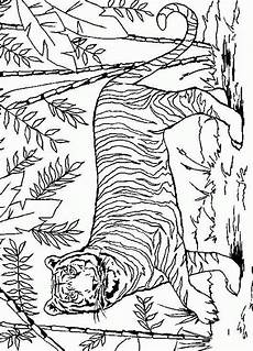 malvorlagen jungle tiger malvorlagen