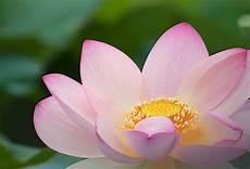 fiore loto centro estetico trapani fiore di loto estetica