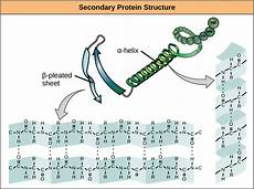 difference between primary secondary and tertiary structure of protein pediaa com