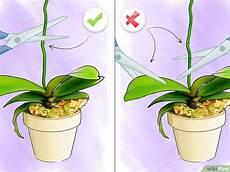 wie pflegt orchideen orchideen pflegen wikihow