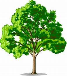 Is Not Just Inilah Arti Gambar Pohon Dalam Psikotes