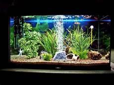 vasche x tartarughe d acqua acquariomania l acquario di sergio penta i vostri
