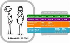 20 Ssw Gewichtszunahme - 18 schwangerschaftswoche 18 ssw f 246 tus fetus