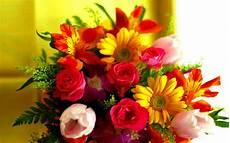 immagini di fiori 47 foto sfondi hd bonkaday