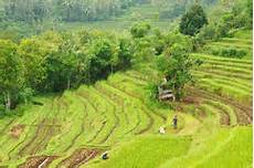 Reis Terrassen Bali Indonesien Stockfoto Bild 2286996