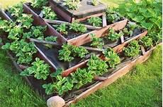 Square Foot Gardening Dave S Garden