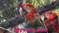 am zoo mysore zoo