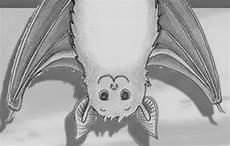 Fledermaus Malvorlagen Instagram Bundchen Malvorlagen
