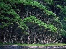 Kumpulan Gambar Hutan Hujan Tropis Hutan Hujan Hutan
